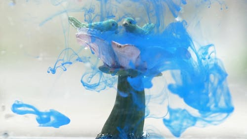 Color Dissolving in Slow-Motion