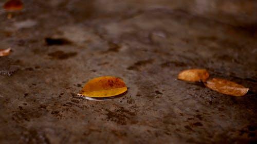 Macro Detailed Video of Raindrops on Leaves