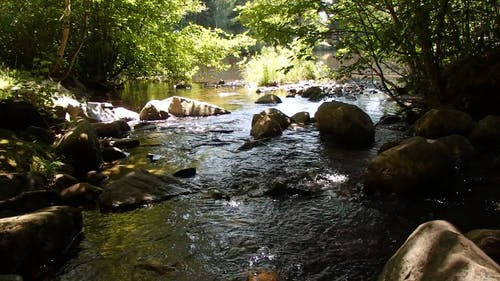 A Flowing Creek in the Middle of the Forest