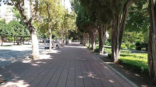 Video Footage of a Pedestrian Walkway