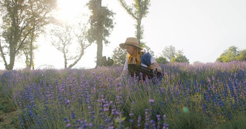 Young Woman Handpicking Lavender Flowers