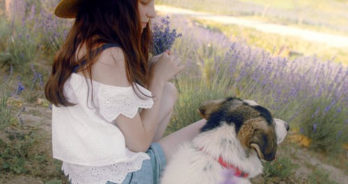 Cute Teen with her Dog in Lavender Fields