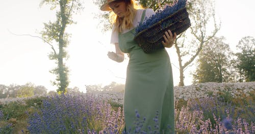 Low Angle Clip of Woman in Lavender Fields