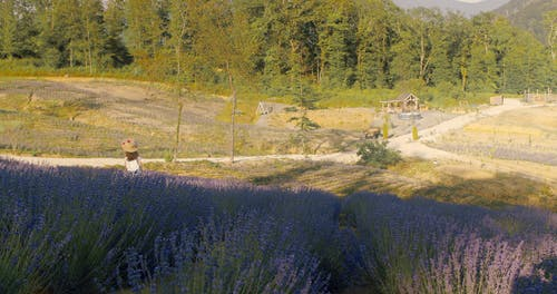 Wide Angle Shot of a Girl in Lavender Fields