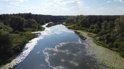 Drone Shot of a River Flowing Between Dense Forest