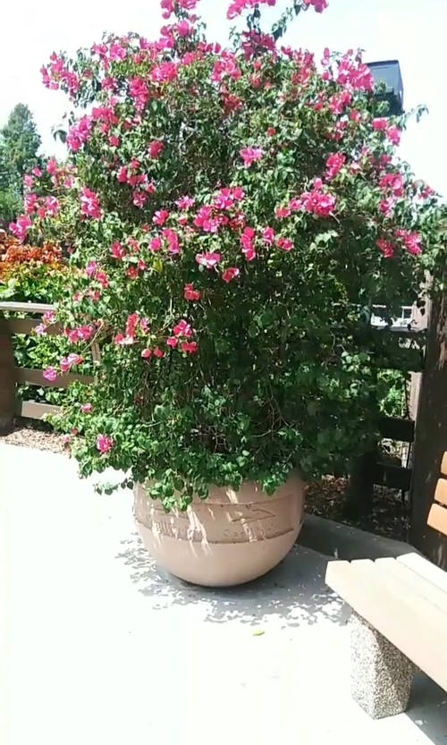 Boomerang Video Of A Potted Ornamental Plant Outdoors