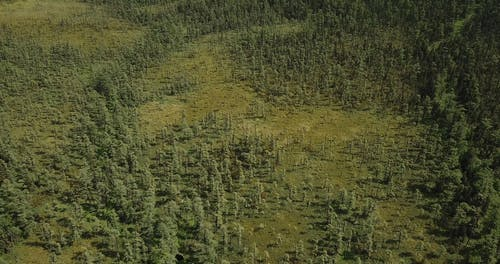 Aerial View Of A Forest In Lush Green
