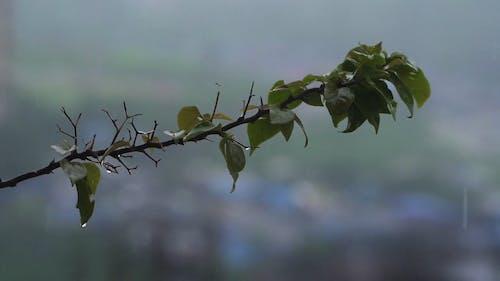 Thorny Plant Soaking Wet In Rain Water