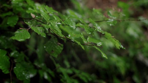 Close-Up View of Green Leaves While Raining