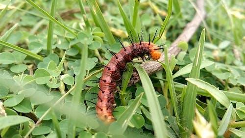 Macro View of a Caterpillar on Green Grass