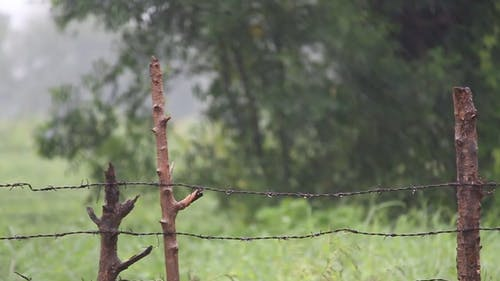Video Clip of a Rainy Day at Farms