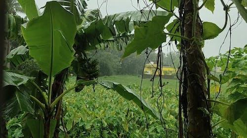 Heavy Rainfall On A Rainy Day