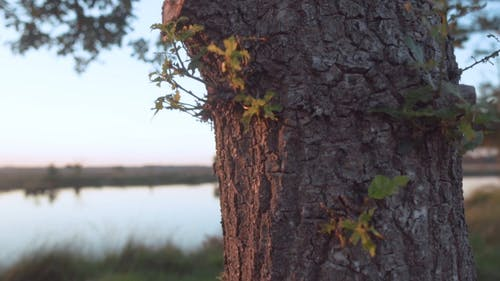 Close Up Shot of a Tree Trunk