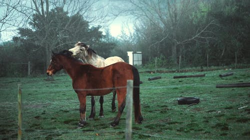 Two Horses on Pasture Land