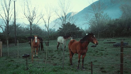 Horses on a Pasture Land