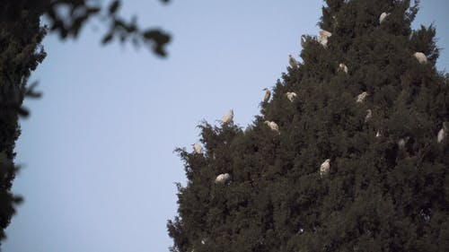 Flock of Birds Resting on the Tree
