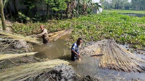 Hardworking Jute Makers from Bangladesh