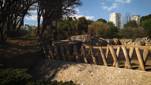 Animal Habitat by a City