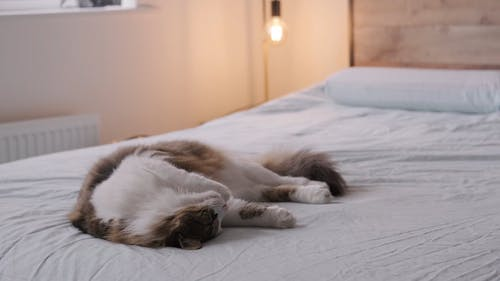 A Furry Cat Sleeping on a Bed
