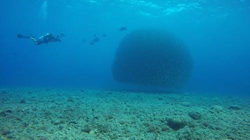 Scuba Divers Exploring Underwater