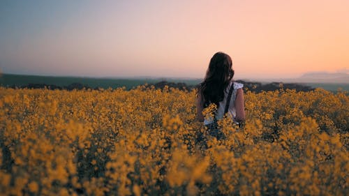 Woman Taking Pictures In The Middle Of A Flower Field