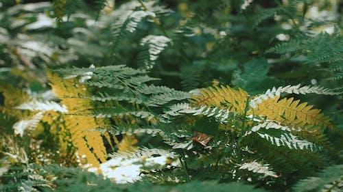 Close Up of Fern Plants