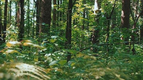 A Dense Green Forest