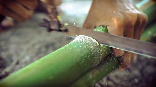 Man Cutting bamboo Stem