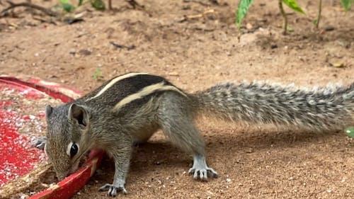 Squirrel Eating Food