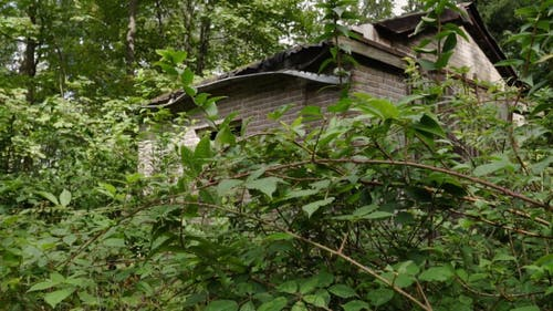 An Abandoned House in the Woods