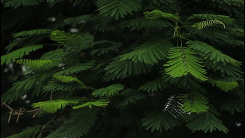 Green Leaves on Forest