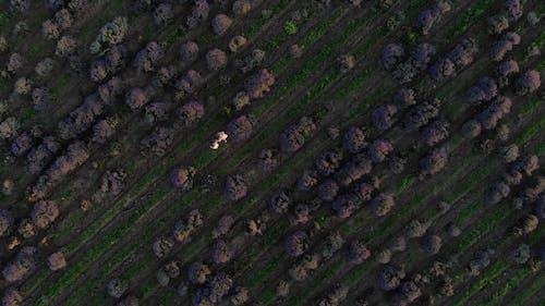 People Walking on a Lavender Field