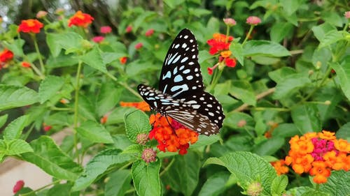 A Butterfly Pollinating a Flower