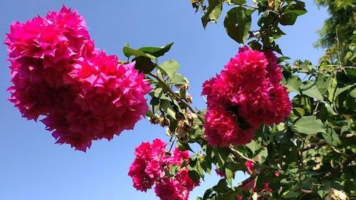 Swaying Pink Flowers