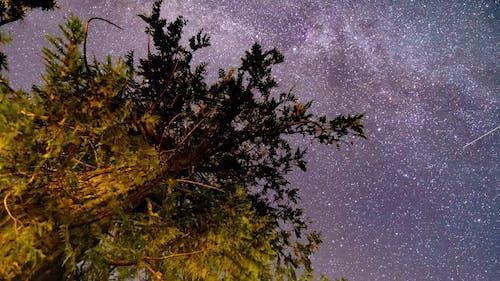Star Gazing On A Clear Night