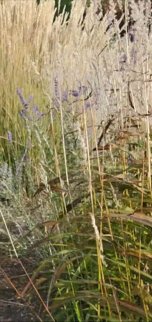 Video Footage Of Plants Growing In The Wild