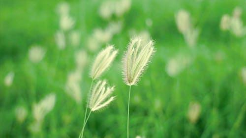 Close Up View of a Grass Flower