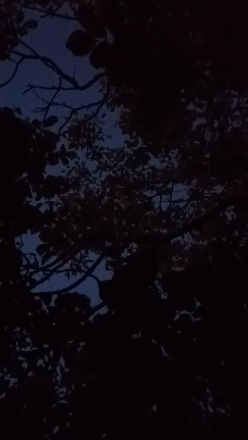 Leaves Swaying in the Wind at Night