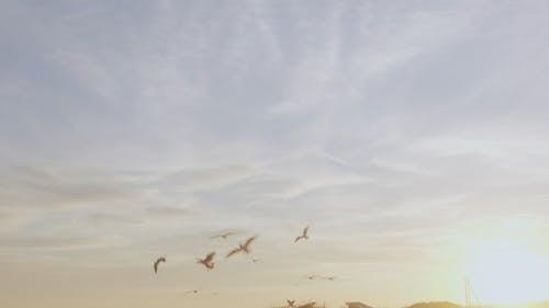 Flying Seabirds at the Beach