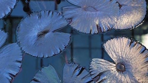 Top View of Aquatic Plant