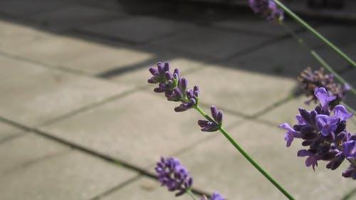Shallow Focus of a Purple Flower