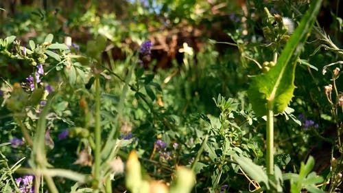 Clos Up View of Plants with Blue Flowers