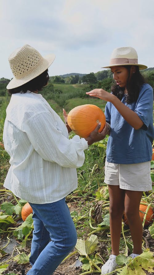 A Young Girl Feeling The Skin Of A Freshly Harvested Pumpkin