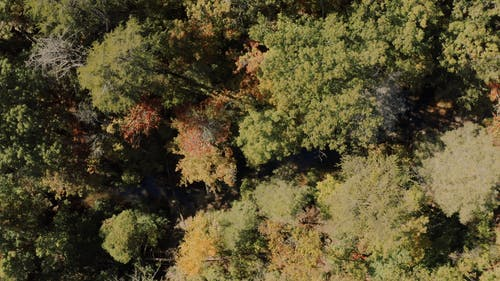 Top View of Forest Trees
