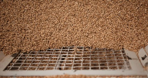 Processing of Grains into the Grinding Mill
