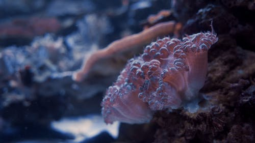Close-up Footage Of Underwater Corals