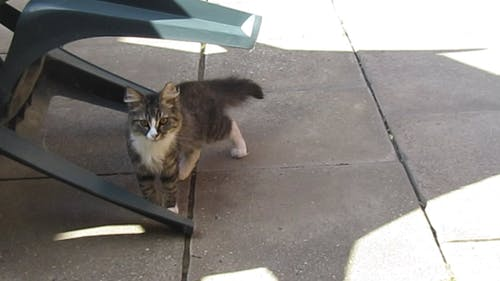 Video of a Cat Outdoors