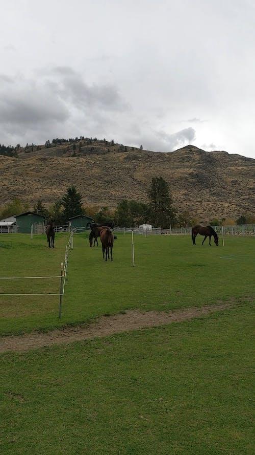 Livestock Farming Of Horses