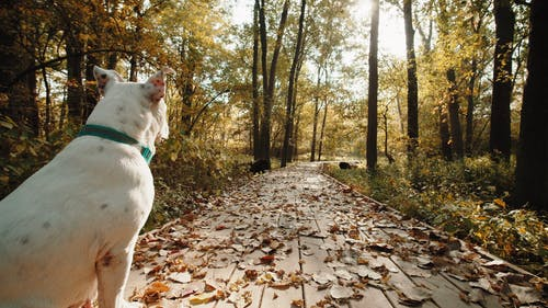 A White Dog Sitting on a Paved Pathway
