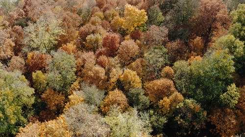 Drone Footage of Autumn Mood Forest